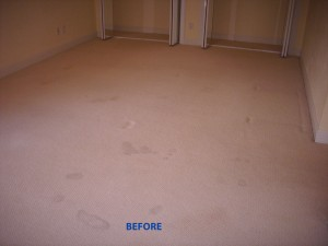 Hollywood_FL_CARPET_CLEANING_002